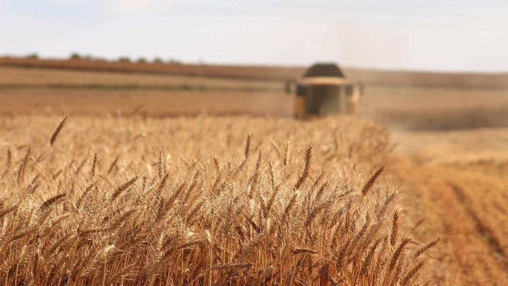 Farm Combine Harvesting Roundup Ready Wheat
