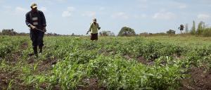 Farmers in a field spraying weed killer